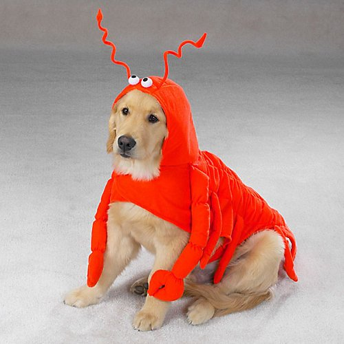 CASUAL-CANINE-LOBSTER-PAWS-DOG-COSTUMES