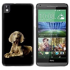 TopCaseStore / la caja del caucho duro de la cubierta de protección de la piel - Weimaraner Proud Grey Blue Eyes Dog - HTC DESIRE 816