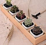 Greenaholics Succulent Plant Pots - Hexagon Ceramic Planters for Succulent, Cactus, White