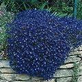 200 Rock Cress, Aubrieta Seeds - Cascade Dark Blue Flower Seeds, Perennial !