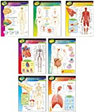 Learning Charts Combo Pack The Human Body Themed Poster Pack RRP £17.00