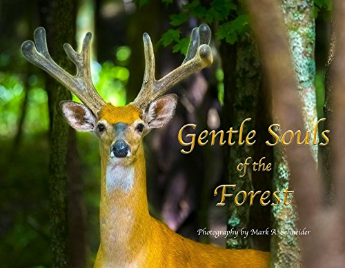 Gentle Souls of the Forest. A Photographic Tribute to the Beautiful and Peaceful Whitetail Deer.