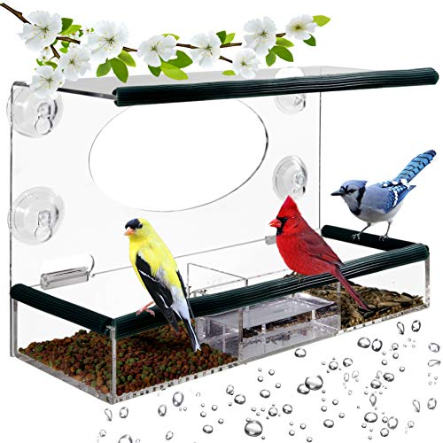Birdious Wild Window Bird Feeder for Outside: Enjoy Unique View Small and Large Birds. Clear See Through, Easy Mounted 4 Strong Suction Cups with Removable Seed Tray. Unusual Gifts (Gifts Unique Mom)