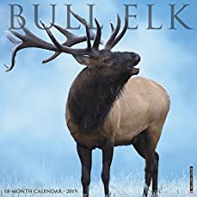 Bull Elk 2019 Wall Calendar