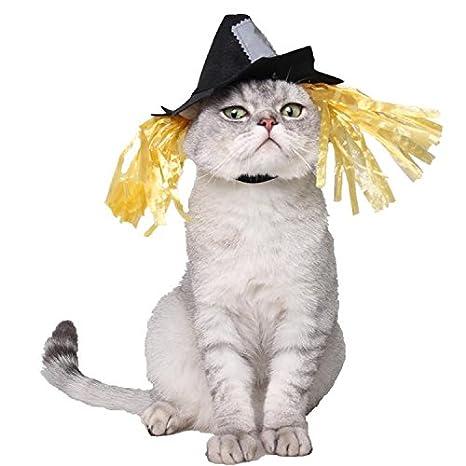 Bwiv sombrero de bruja para gatos y perros pequeños disfraz de Halloween para mascotas Negro y amarillo M: Amazon.es: Productos para mascotas