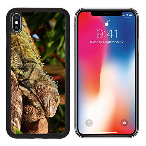 MSD Premium Apple iPhone X Aluminum Backplate Bumper Snap Case IMAGE ID 34989069 Green Iguana lounging around in the gardens