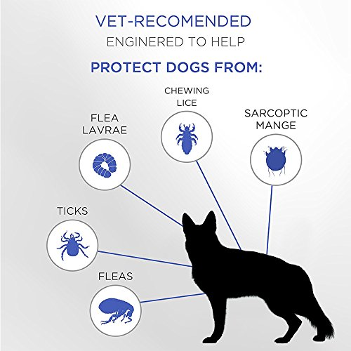 Premium Care Flea And Tick Collar For Dogs | Prevents And Removes Fleas, Ticks, Lice And Mosquitos In 24 Hours | 8 Months Protection | 100% Quality Flea And Tick Prevention For Dogs