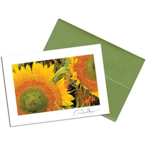 Donald Verger Photography Fine Art Note Cards. Elegant Sunflowers. 3.5x5. Set of 8 Best Quality, Blank Folded Sales