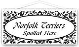 Norfolk Terriers Spoiled Here