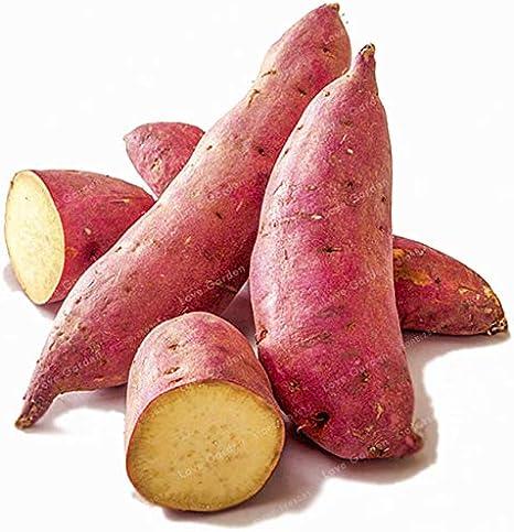 20 Pcs Sweet Potato Bonsai Delicious Purple Sweet Potato Vegetable Bonsai Fresh Organic Food Fruit And Vegetable Garden Plant Amazon Ca Patio Lawn Garden