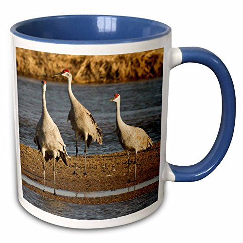 3dRose Danita Delimont - Birds - Sandhill crane bird, Platte river, Nebraska, USA - US28 WSU0028 - William Sutton - 15oz Two-Tone Blue Mug (mug_145008_11)
