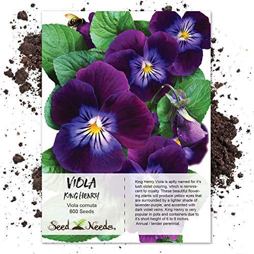 - Seed Needs, King Henry Viola (Viola cornuta) 600 Seeds