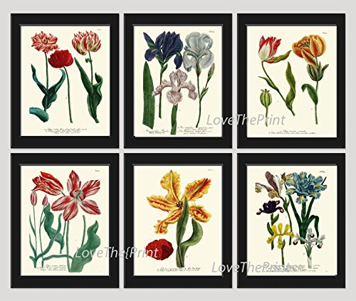 Blue Tulip Gallery - Botanical Print Set of 6 Antique Beautiful W Red Yellow Tulip Blue Pink Iris Garden Nature Plant Flowers Home Room Decor Wall Art Unframed