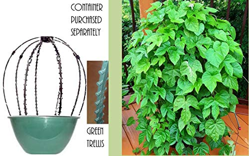 Scroll Trellis 20 Inch by 20 Inch for Your Hanging Baskets with Wire Hangers or Containers, Planter Trellis or Topiary Frame for Potted Plants (2 Green, 2, Bright White Solar Lights)