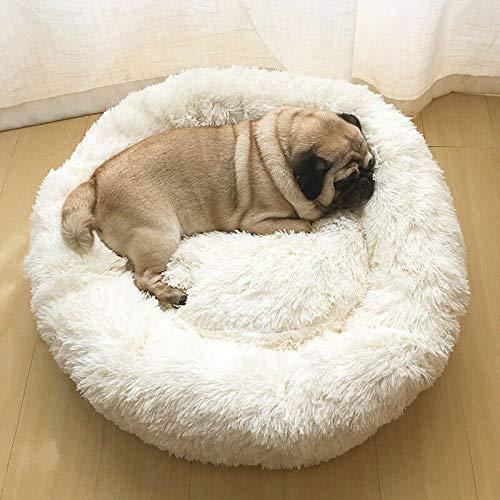 Top 11 Best Pet Dog Beds in India