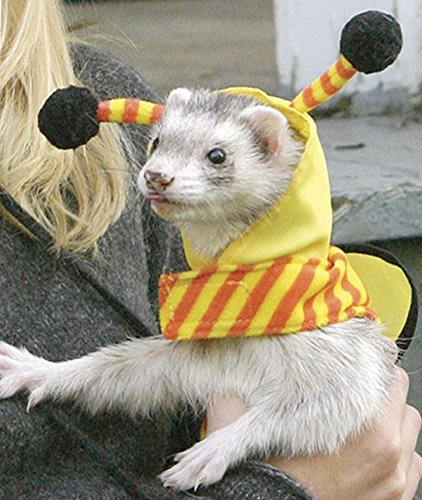 (Marshall Ferret Bee Costume)