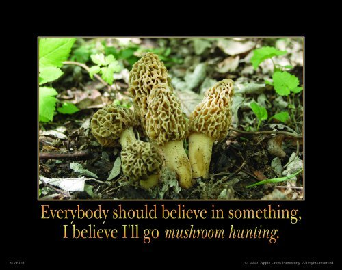 Morel Mushroom Hunting Motivational Poster Art Print 11×14 Fresh Dried Spores Wall Decor Pictures