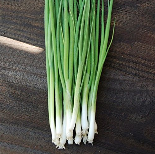 Evergreen Bunching Nebuka Onion Seeds, 500+ Premium Heirloom Seeds, Fun Addition to Garden! ON Sale!, (Isla's Garden Seeds), Non GMO, 85% Germination Rates, Highest Quality Seeds