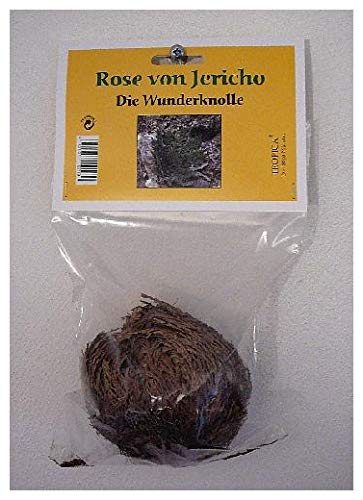 TROPICA - Rose of Jericho (Selaginella lepidophylla) - 1 Bulbs - Bulbs/Rose of Jericho