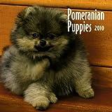 Pomeranian Puppies 2010 Mini Wall