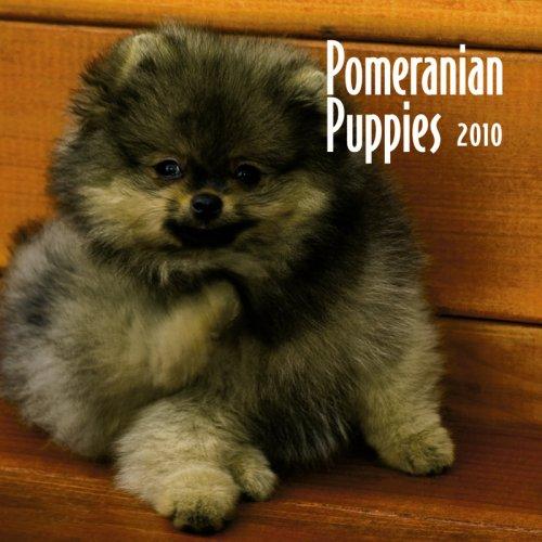Calendar Dog Mini 2010 - Pomeranian Puppies 2010 Mini Wall