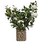 26-Silk-Gardenia-Flower-Arrangement-wStone-Pot-CreamGreen