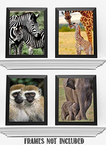 Safari Animal Set- Mom & Baby Nursery -4 Image Set- 8 x 10