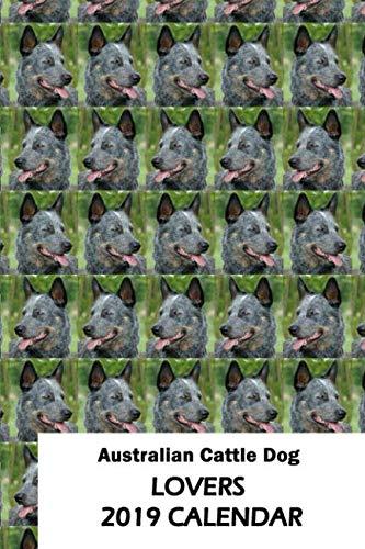 Australian Cattle Dog Lovers 2019 Calendar ()