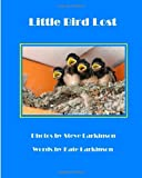 Little Bird Lost, Steve Larkinson, 1492762822