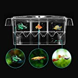 Petzilla Aquarium Fish Breeder Box for Baby Fish Hatchery (Independent)