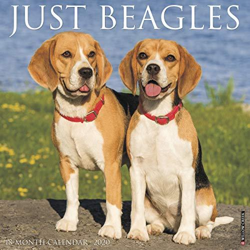 Top 9 recommendation beagle calendar 2020 desk