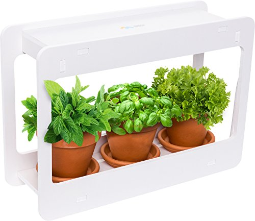 Mindful Design LED Indoor Herb Garden - at Home Mini Window Planter Kit for Herbs, Succulents, and Vegetables (White) (Best Herbs To Grow In Pots Indoors)
