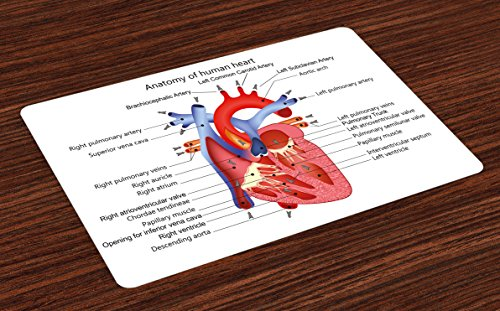 Ambesonne Educational Place Mats Set of 4, Medical Structure of The Hearts Human Body Anatomy Organ Veins Cardiology, Washable Fabric Placemats for Dining Room Kitchen Table Decor, Coral Red Blue