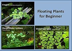 Aquarium floating plants package 12 amazon for Plastic floating pond plants