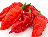 "Ghost Pepper Seeds- 25+""Bhut Jolokia"" by Ohio Heirloom Seeds for 2020"