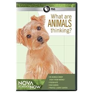 Nova Sciencenow: What Are Animals Thinking