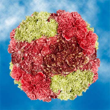 GlobalRose 350 Fresh Cut Novelty Color Carnations - Fresh Flowers Wholesale Express Delivery by GlobalRose (Image #4)
