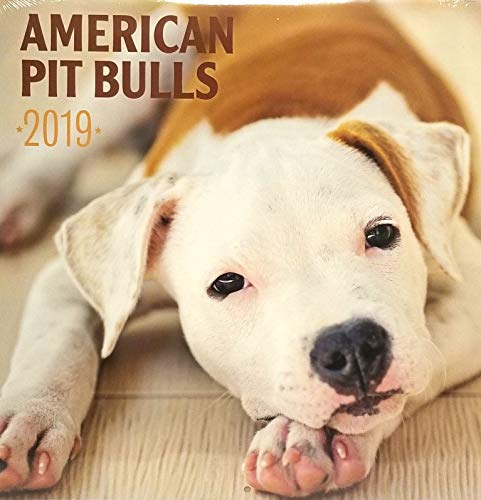 American Pit Bulls 2019 12