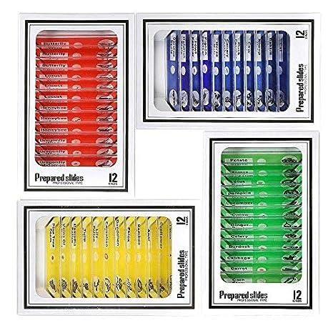 on Orders Over $35 Vision Scientific VSB002 Beginner Plastic Prepared Slides Set of 12