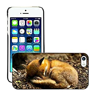 Hot Style Cell Phone PC Hard Case Cover // M00047140 red sleeping wild fox animals // Apple iPhone 5 5S