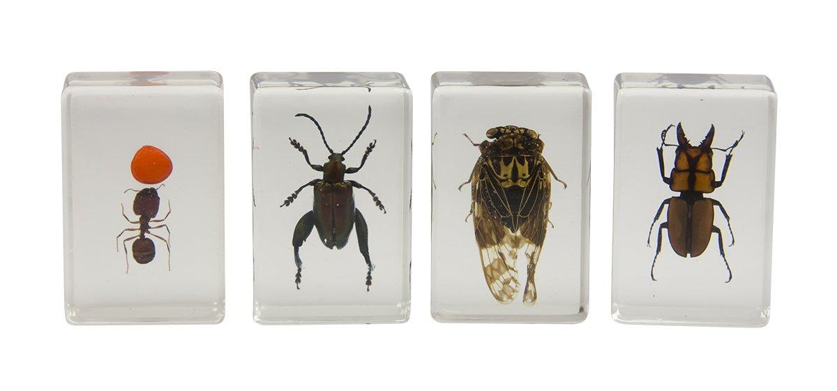 Celestron 44409 3D Bug Specimen Kit #3 (Black, Orange, Brown)