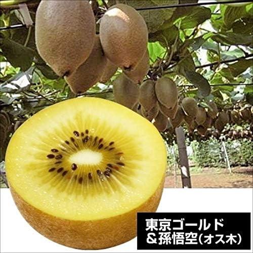国華園 果樹苗 キウイ 東京ゴールド&孫悟空(黄肉用オス木) 2種2株