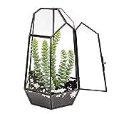The Fellie Glass Terrarium, 9.8' Tabletop Succulent Plant Terrarium Geometric with Door, Black