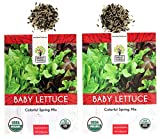 Baby Leaf Lettuce Seeds (Colorful Spring Mix) - 2 Seed Packets! - Over...