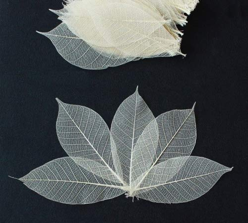 Tree Natural Leaf - ChangThai Design 100 Skeleton Leaves Rubber Tree Natural color Scrapbooking Craft DIY CARD Wedding