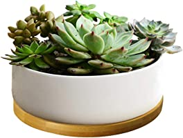 LANKER 6.3 Inch Round White Ceramic Succulent Planter Pot Decorative Cactus Plant Pot Flower Container with Bamboo Tray...