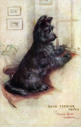 c1910~Maud West Watson~Skye Terrier Puppy Dog Watches & Waits~6 pack NEW Matte Vintage Picture Large Blank Note Cards with Envelopes