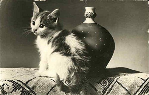 (Black and White Kitten by Vase on Lace Runner Cats Original Vintage Postcard)
