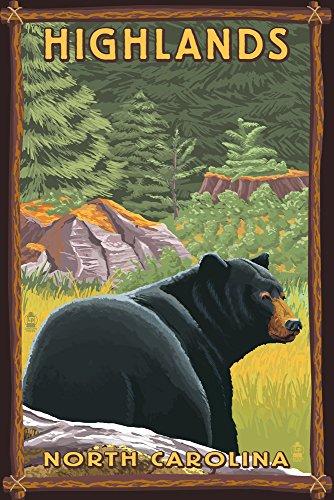 Highlands, North Carolina - Black Bear in Forest (9x12 Art Print, Wall Decor Travel Poster)