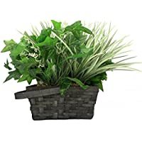 Spy-MAX WiFi Battery Powered Decorative Plant Hidden Camera and DVR - Motion Activated Spy Gadget - Watch Live or SD Recordings - Watch Live - SD Storage - Best Recorder for Home, Kids, Nanny, Office
